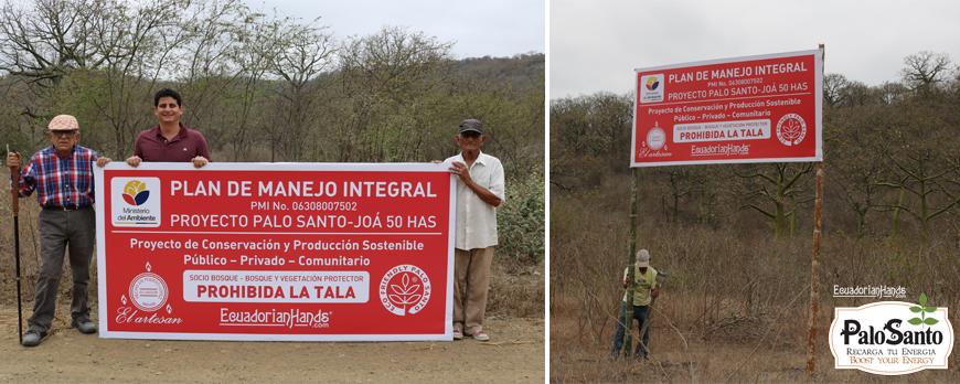 Palo Santo tree protection