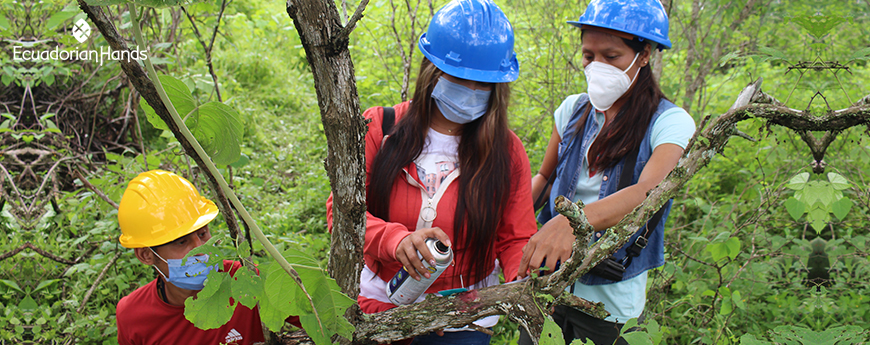 Aprende a trabajar de forma sostenible los bosques de #PaloSanto | GIZ Ecuador