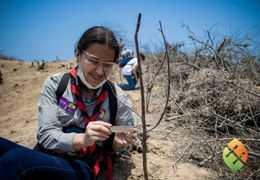 EcuadorianHands planta más árboles de Palo Santo en la comuna Ligüiqui en Ecuador