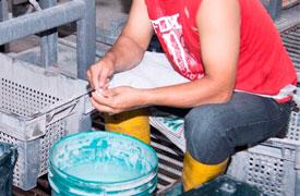 Ecuadorianhands-Tagua-manufacture-Slice-selection.jpg
